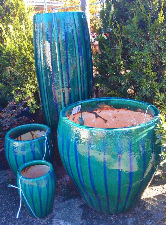 February Showcase Of Plants South Pleasantburg Nursery