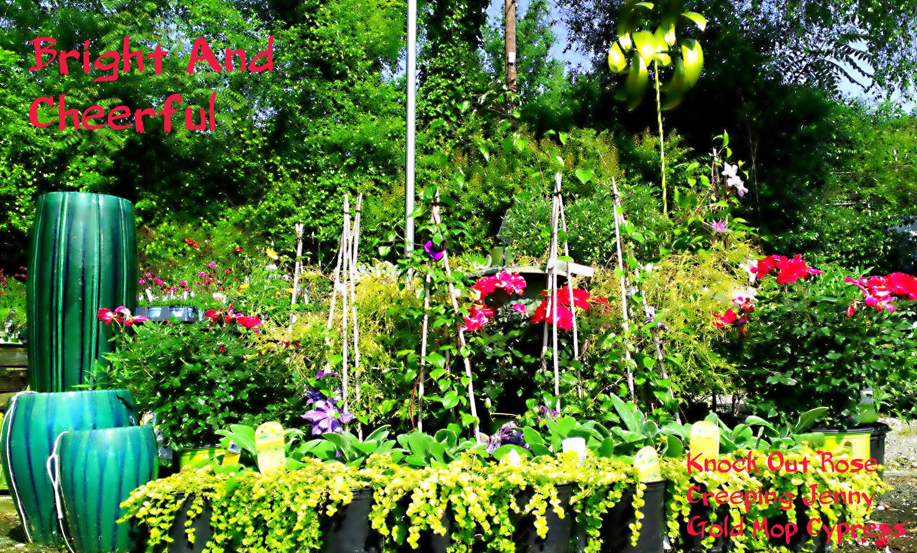 Perennials For You Perennials For Everybody South Pleasantburg