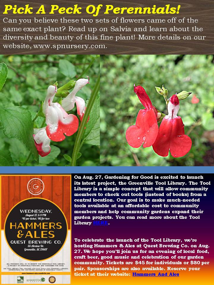 August 2014 newsletter south pleasantburg nursery for Koi pond builders greenville sc